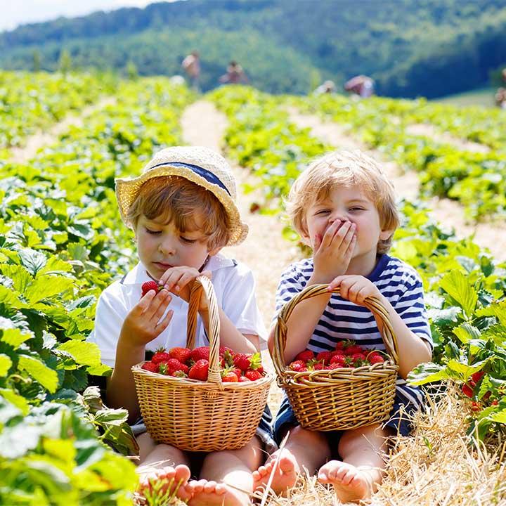 jordgubbar-pojkar